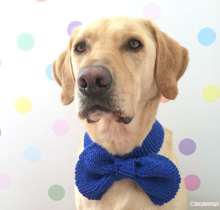 Sandy in a bow tie