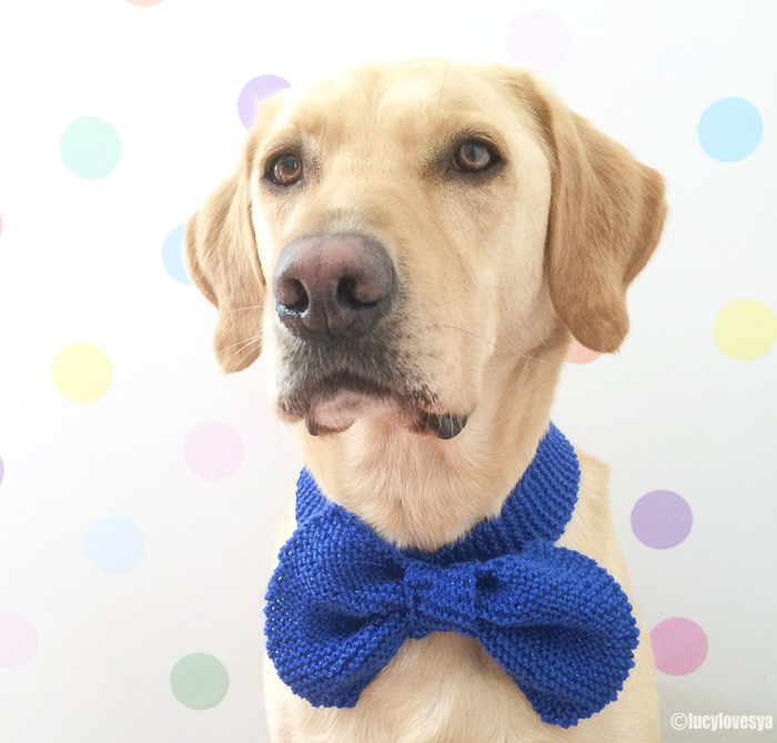 Sandy-in-a-bow-tie