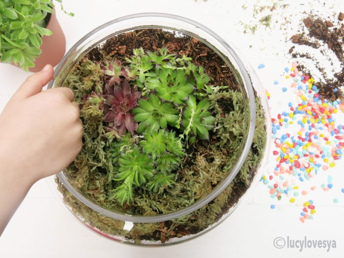 Adding Moss to Terrarium