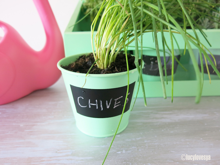 dotcom-chives-pot