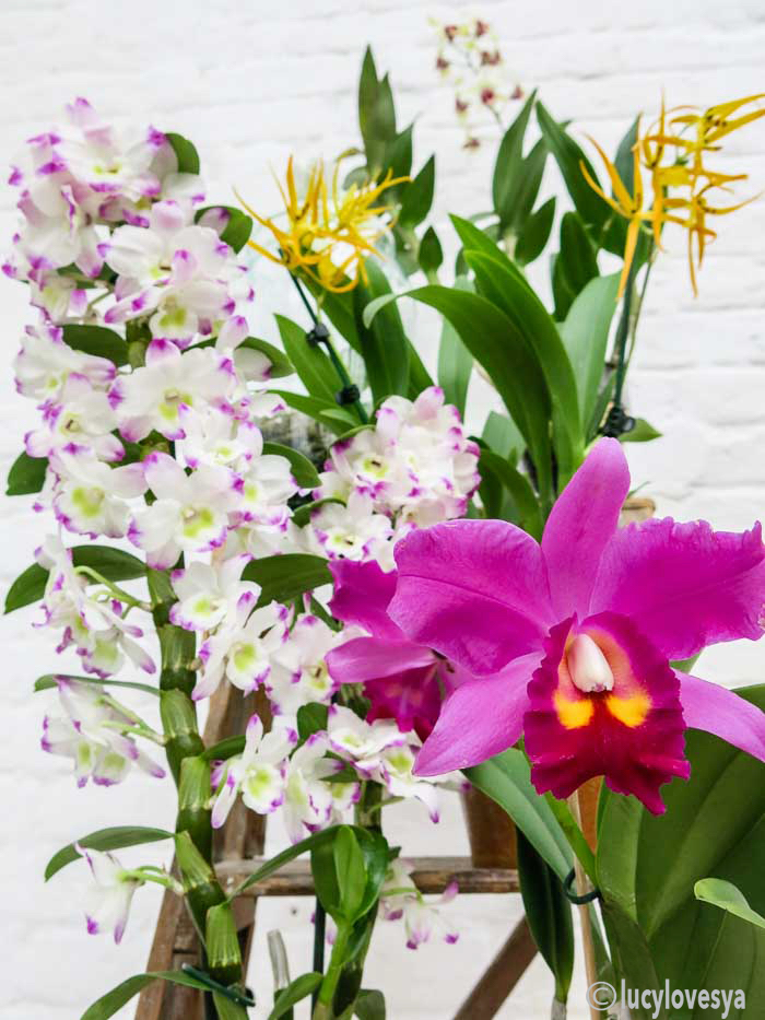 orchids-colour-inspiration