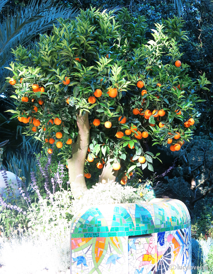 Mediterranean Garden Orange Tree