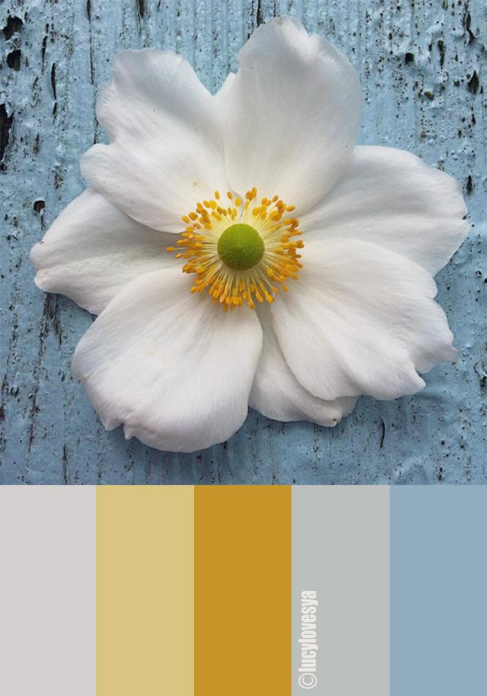 colour palette shades