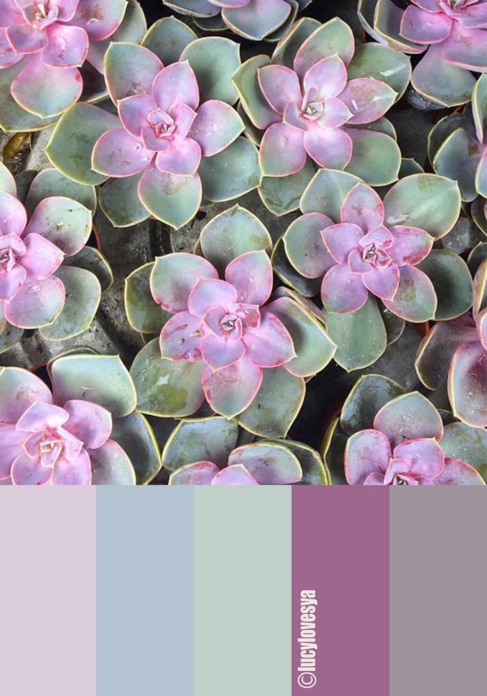 succulent inspiration