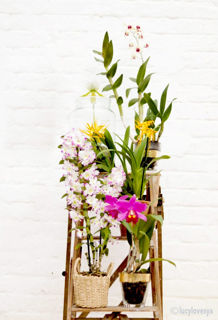 houseplant-of-the-month-orchids
