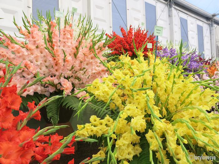 Gladioli Flowers Chelsea