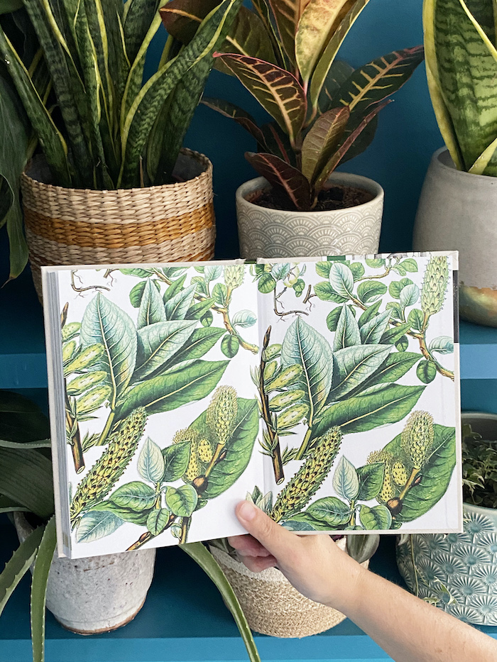 Sally Coulthard Author Plant Book Illustrations