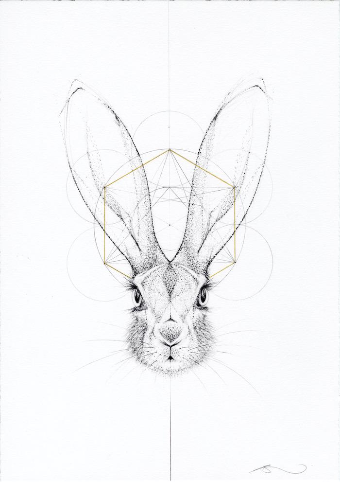 hare drawing fine art jessica albarn