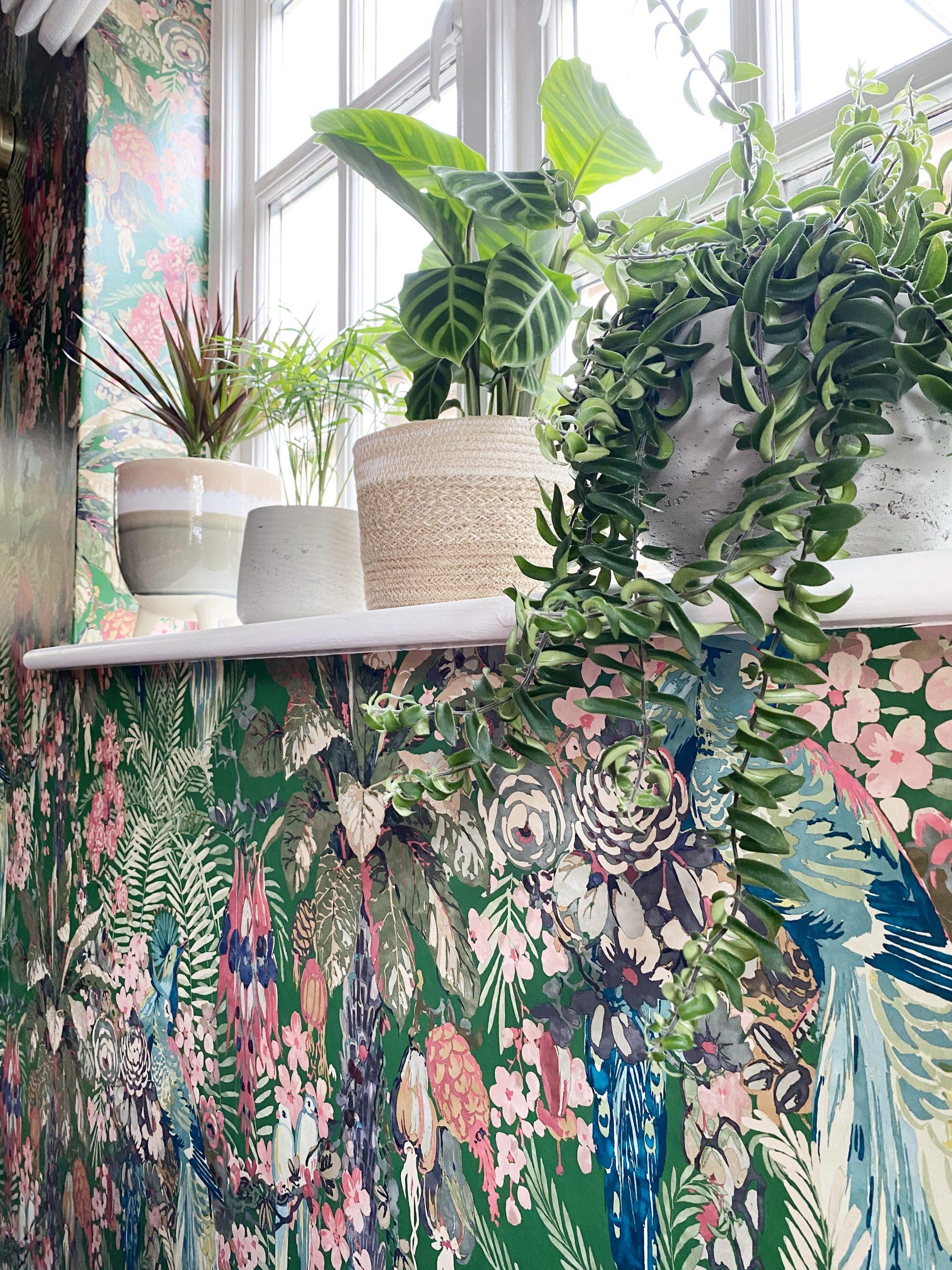 houseplants and linwood wallpaper tropical shelf