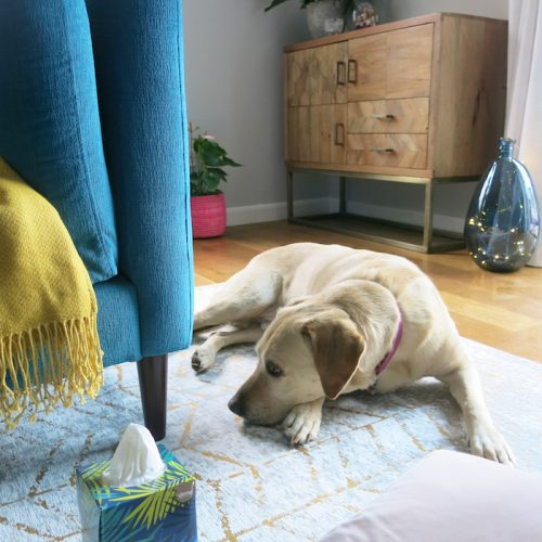 Styling Cosy Colourful Corners with Kleenex®